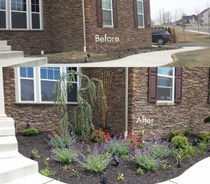 bucks county low maintenance flower beds