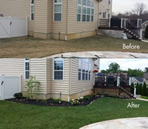 bucks county low maintenance plants