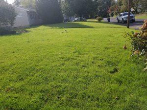 bucks county pa new lawn installation