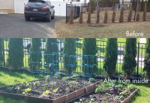 bucks county shrub planting