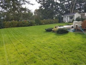 bucks county yardley new grass