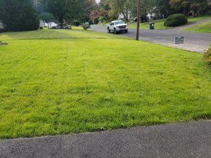 bucks county yardley new lawn