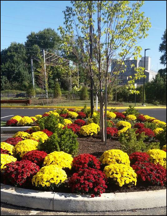 commercial flower planting bucks county