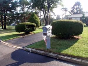 driveway plant company bucks county