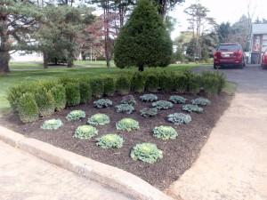 driveway planting contractor bucks county