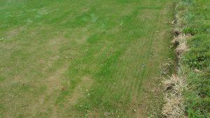 lawn install yardley tall fescue