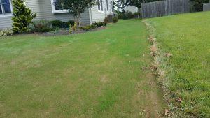 lawn installation yardley tall fescue