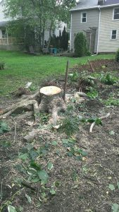 newtown pa tree stump removal